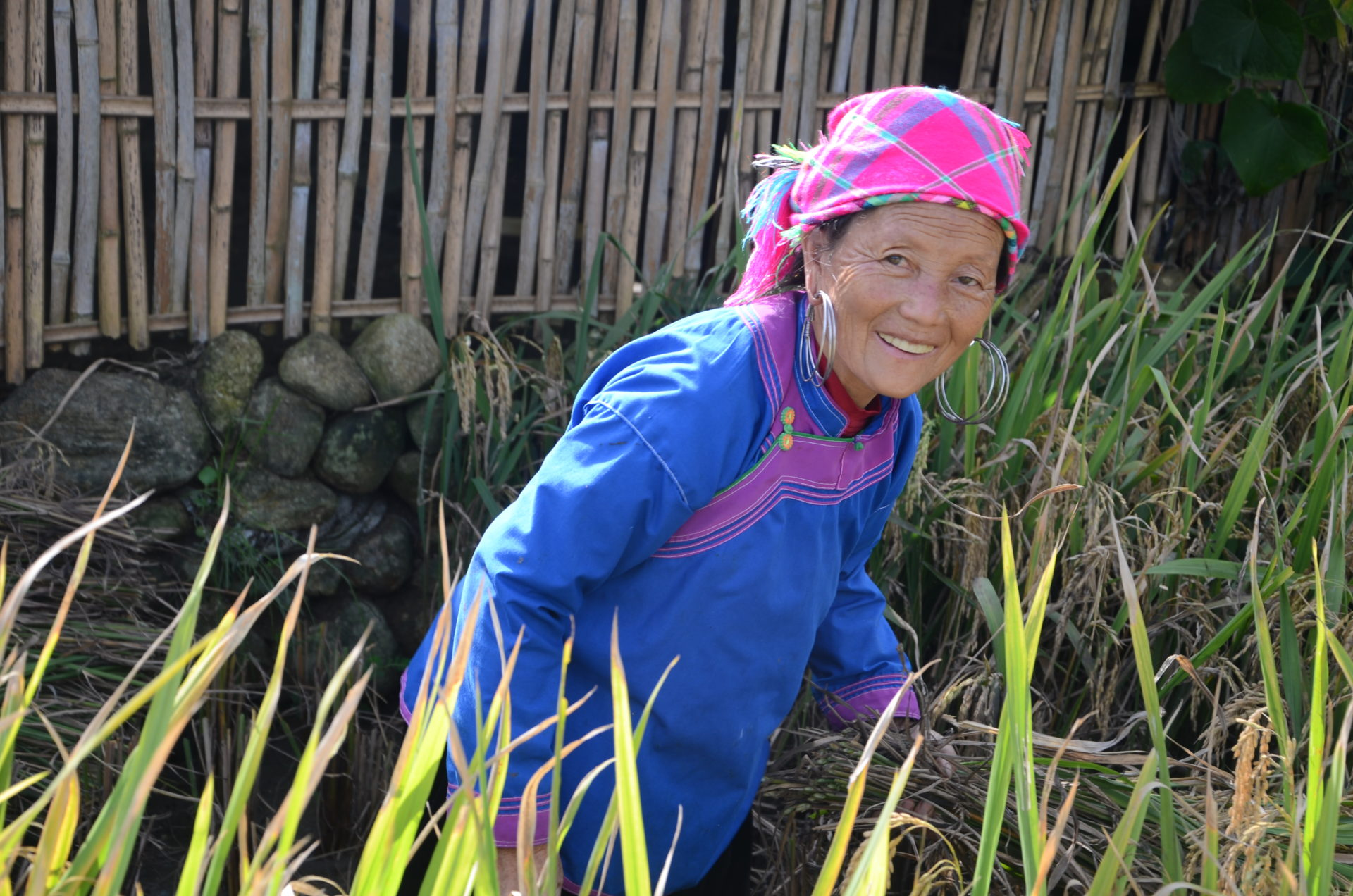 H'Mong lady working on her garden in Cat Cat village Sapa