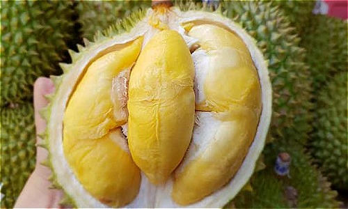 Vietnamese Fruit - Durian
