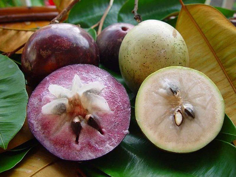 Fresh Star Apple in Mekong delta