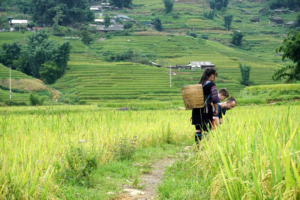 Why Vietnam is one of the best places to travel with kids